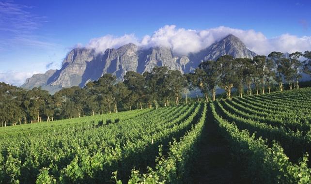 Telegraph Thelema Mountain Vineyards Winery
